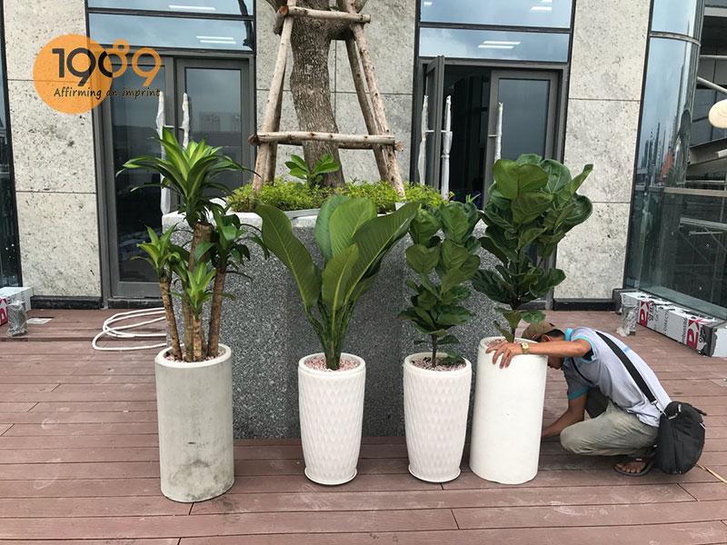 Dịch vụ cho thuê cây cảnh tại TP Hồ Chí Minh