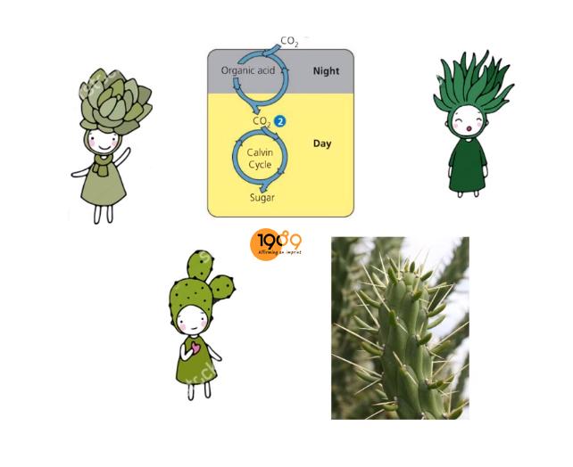 10 loài cây nội thất hấp thu khí CO2 vào ban đêm – ƯU TIÊN đặt trong phòng ngủ, phòng tối.